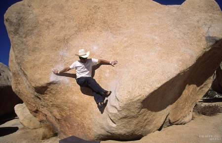 Stem Gem, Joshua Tree (2003)_1.jpg